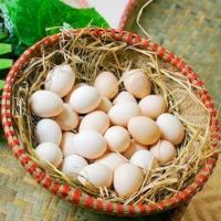 Trứng gà ta 4.200 đ/quả